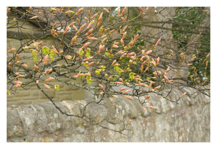 Pink sprigs