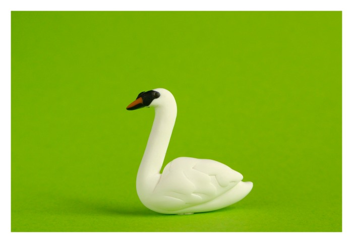 The mute swan finished