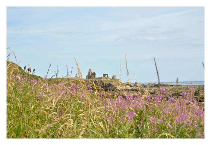 Approaching St. Monans we find the Newark Castle and Doocot, known since the 13th century. The path is flanked by pink flowers that make the path even more special.