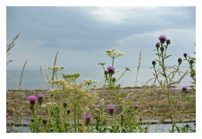 Local wild flowers turn the sea and rocky landscape into a softer place