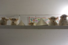 "Sheep at ""A vida Portuguesa"", a delightful shop"