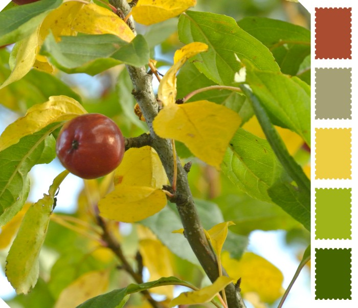 Orchard colors