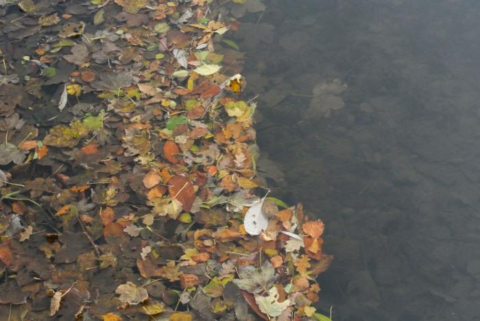 Fallen leaves in the Brae