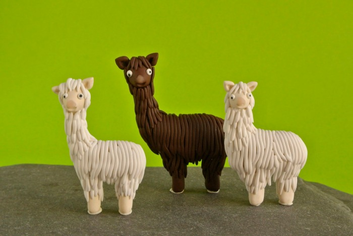 The Alpaca flock