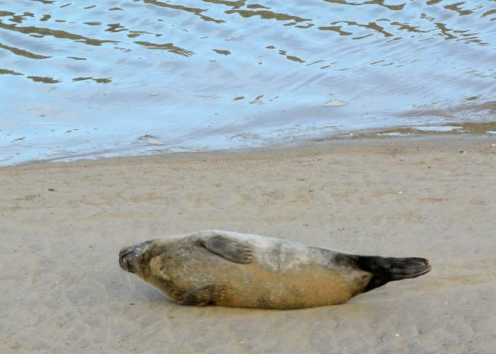 Rolling seal