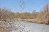 Arnold Arboretum pond with ice