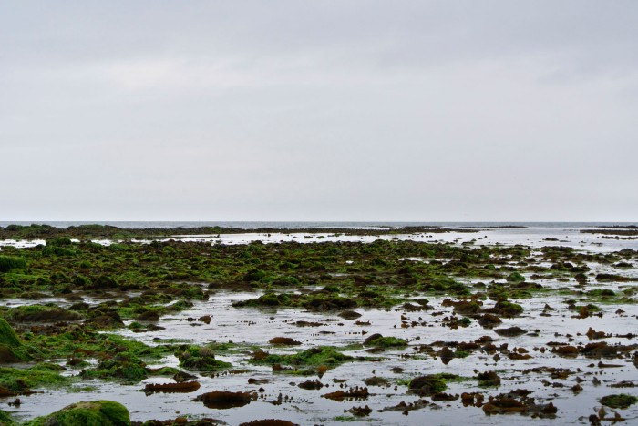 The rock pools at East Sands