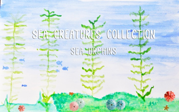 Sea urchins from the Sea Creatures collection