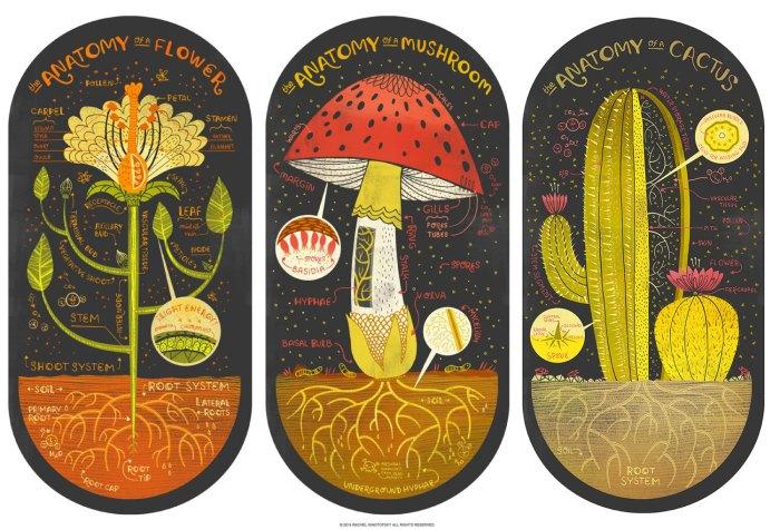 Plant Anatomy by Rachel  Ignotofsky Image credits by Rachel Ignotofsky