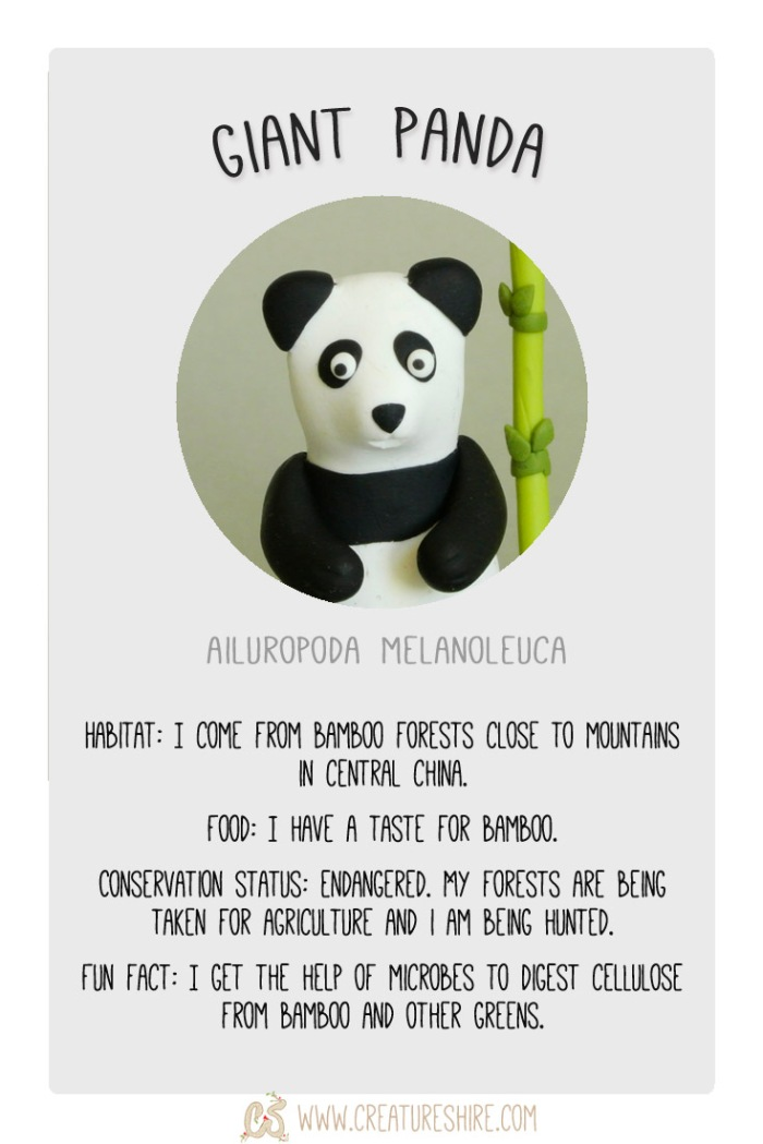 Creature of the Month, Giant Panda