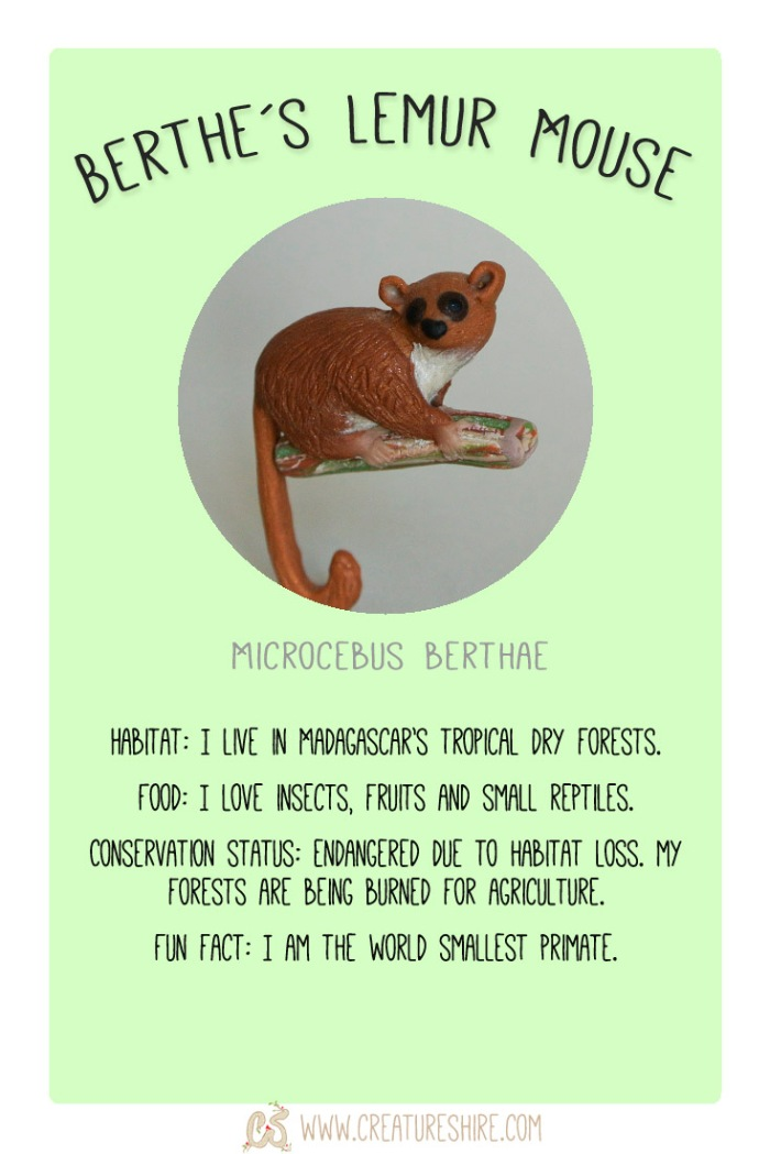 3_CreatureMonth-March-Berthes Lemur Mouse