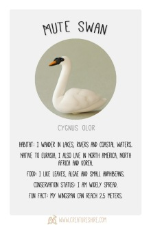 Creature Month Mute swan