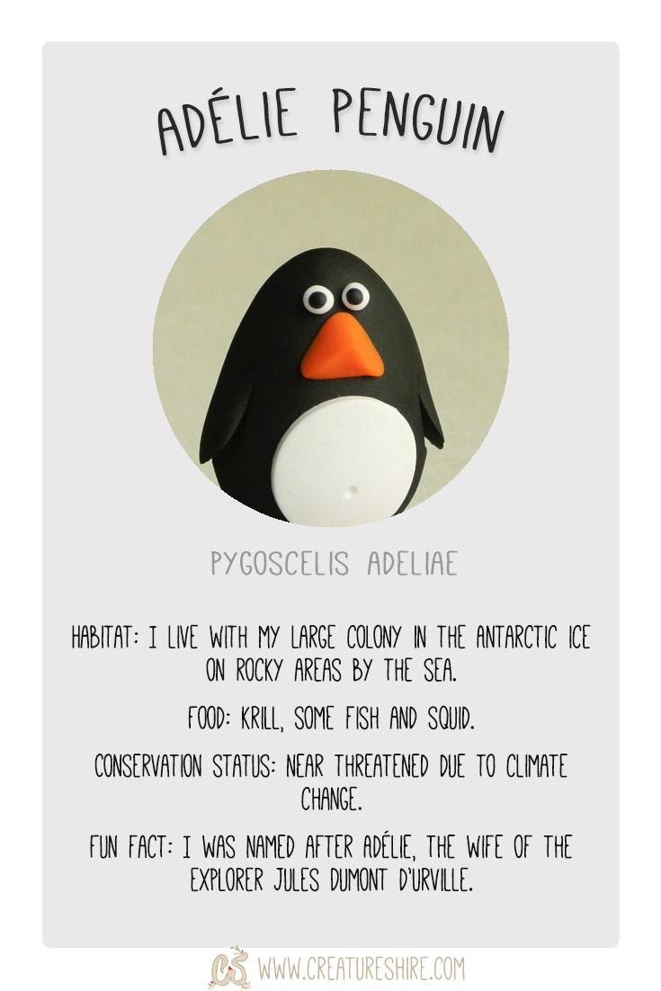 Creature of the month, Adélie Penguin
